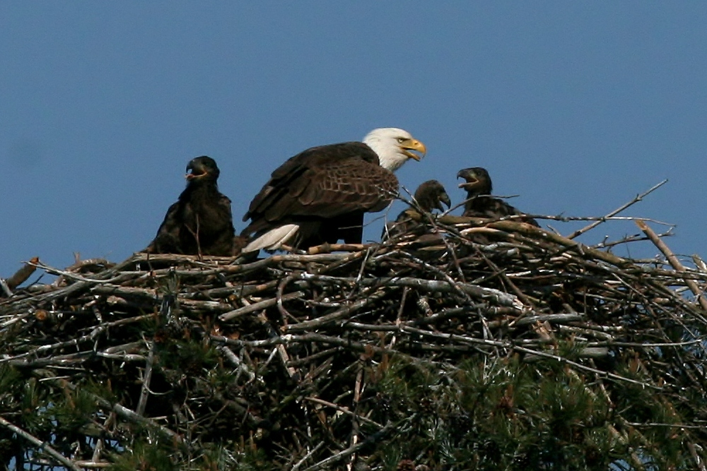 blog Eagles 5-19 036 (2)