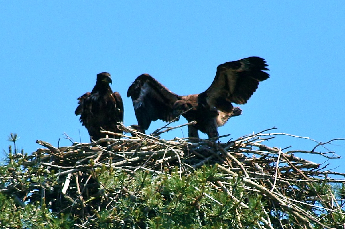 Eagle Triplets 6-9 023 (1205x800)