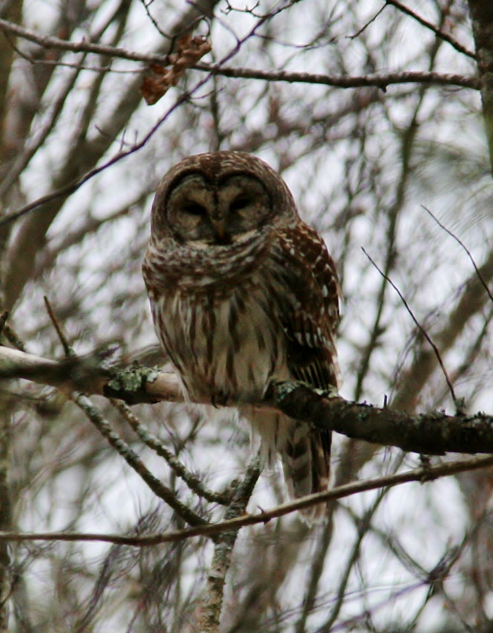 Owls 2013 067 (2) (997x1280)