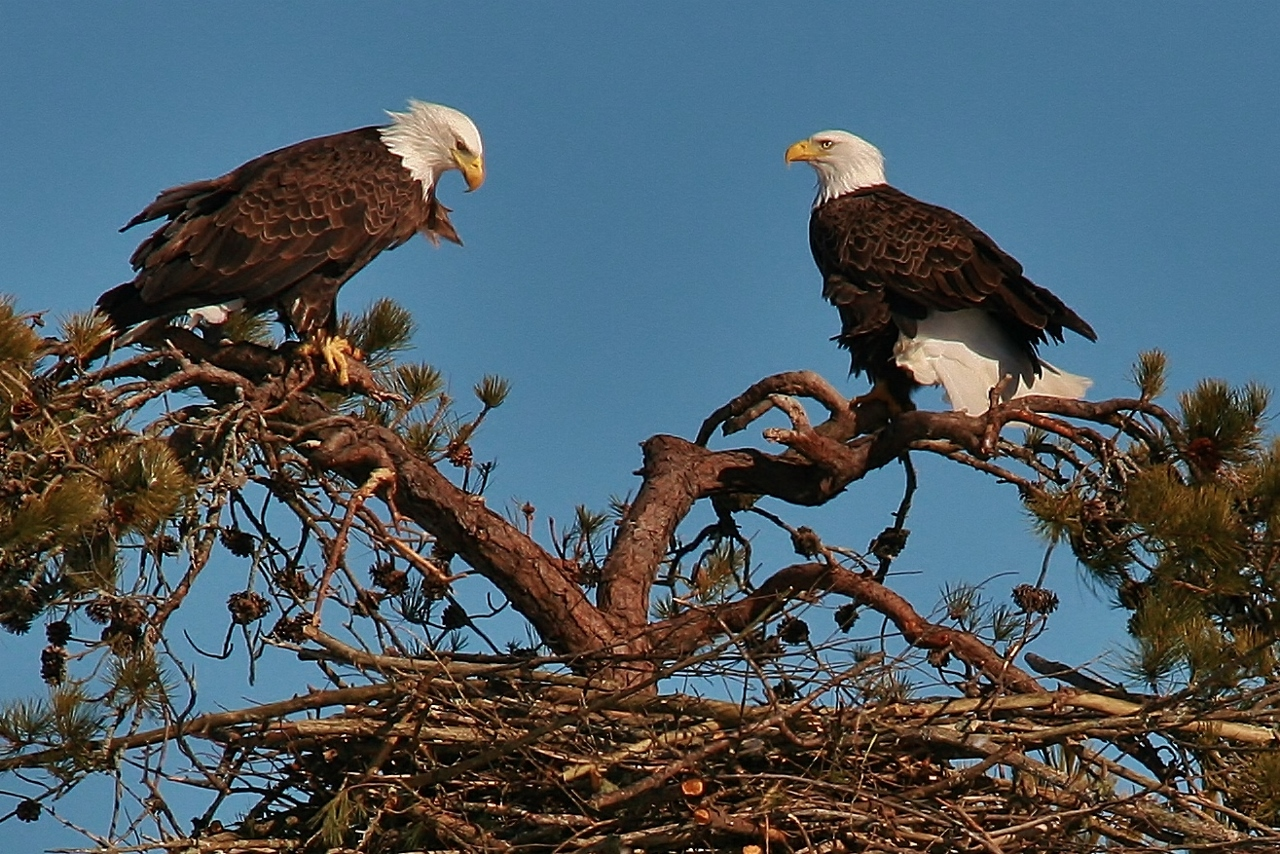 Eagles Nest building 3-9 047 (1280x854)