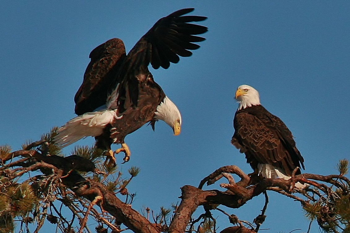 Eagles Nest building 3-9 049 (1130x753)