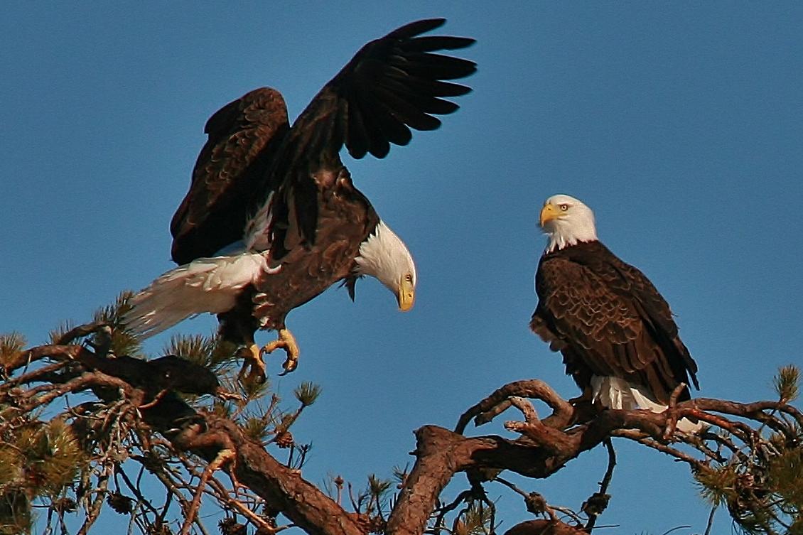 Eagles Nest building 3-9 049 (1130x753)