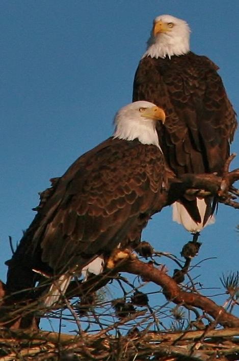 Eagles Nest building 3-9 110 (469x706)