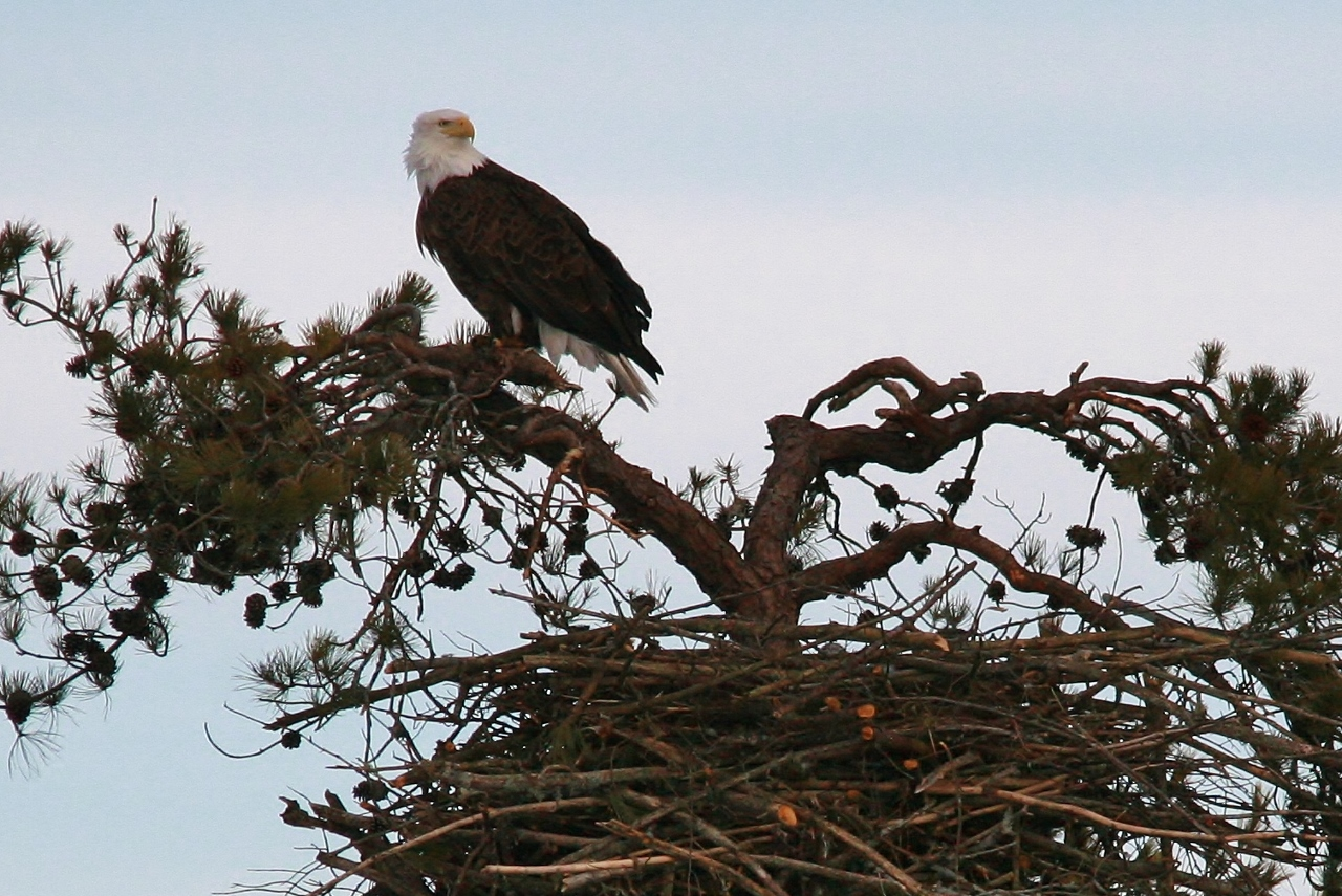 Cute Home Of An Eagle Ideas - Everything You Need to Know About ...