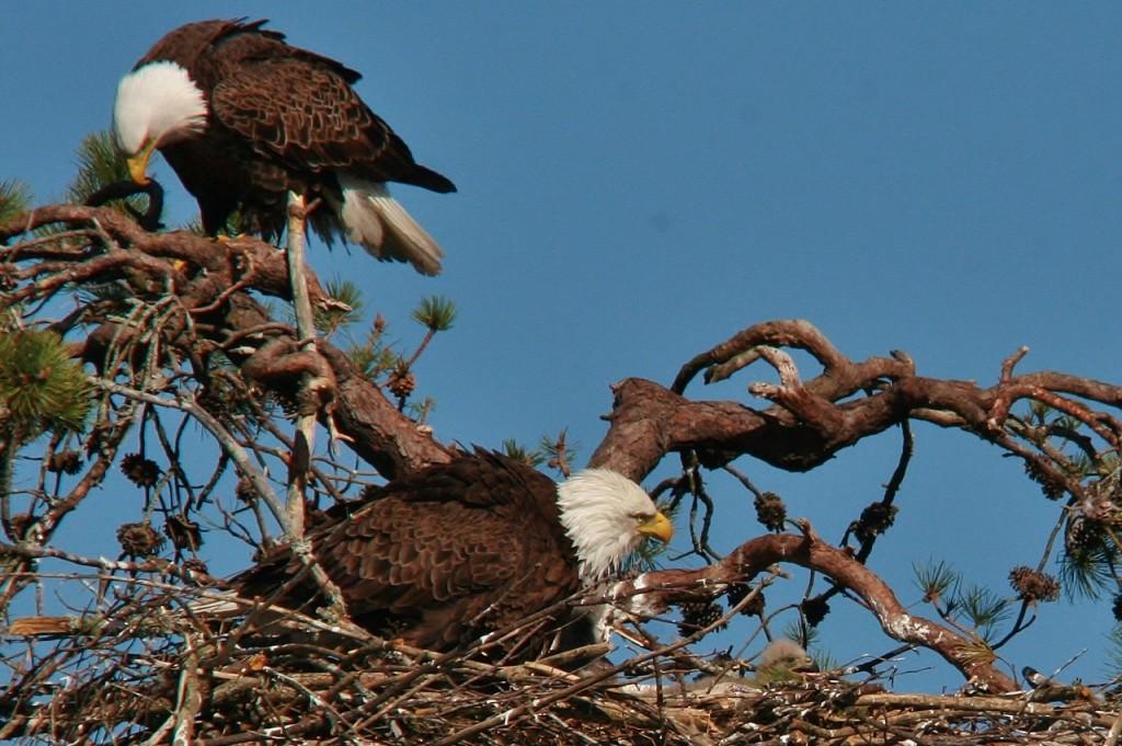 Eagles 5-4 028 (1280x852)