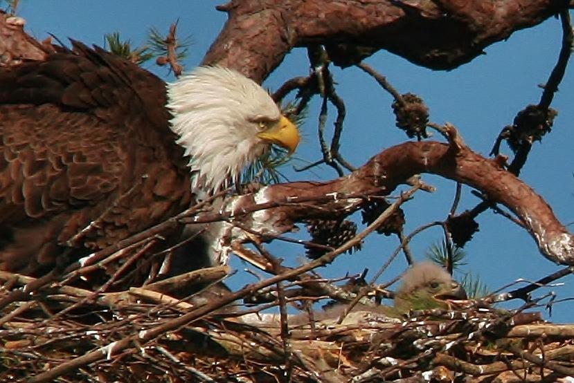 Eagles 5-4 028 (829x554)