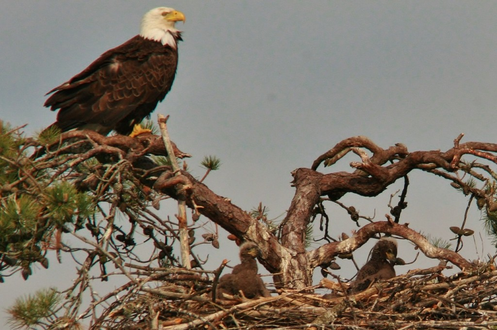 Eagles May 12  (5) (1280x852)
