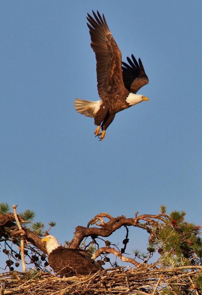 Eagles May 15  (73) (702x1024)