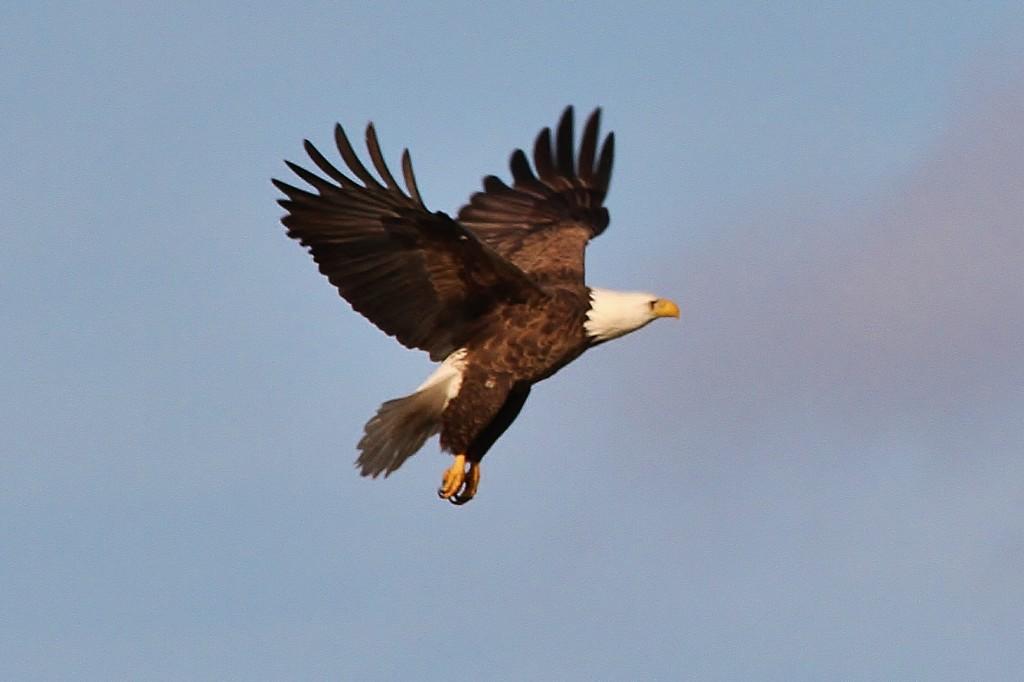 Eagles May 15  (8)