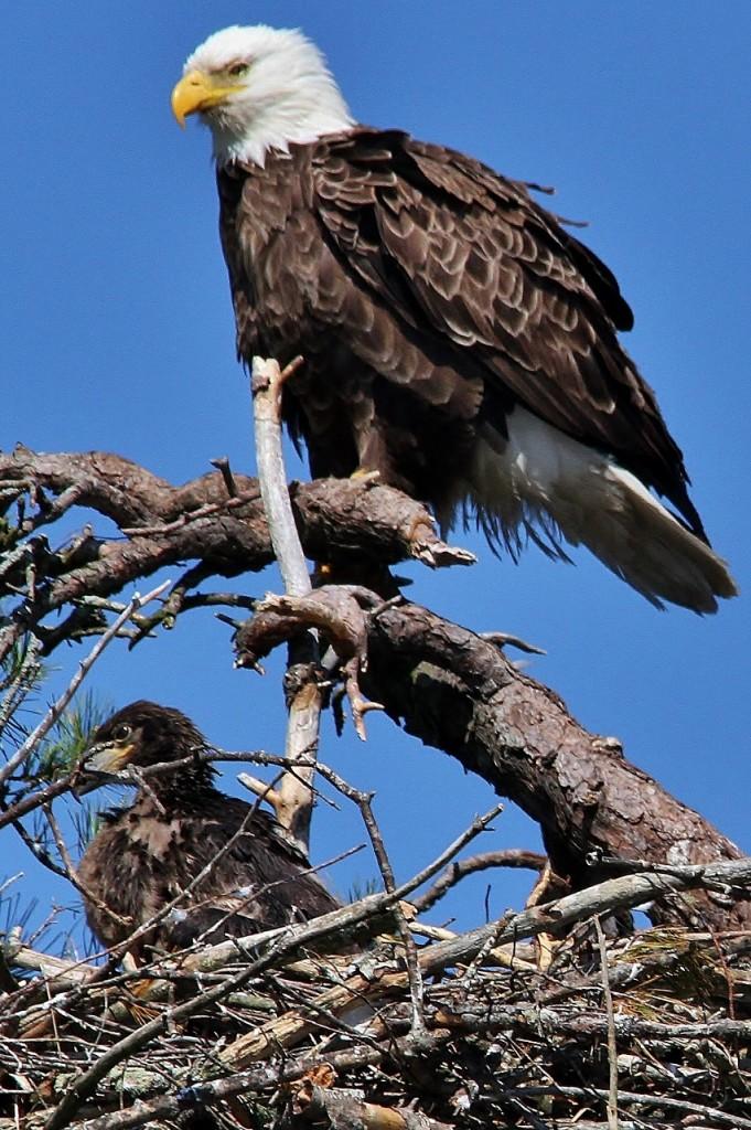 May 27 Eagles 070 (852x1280)