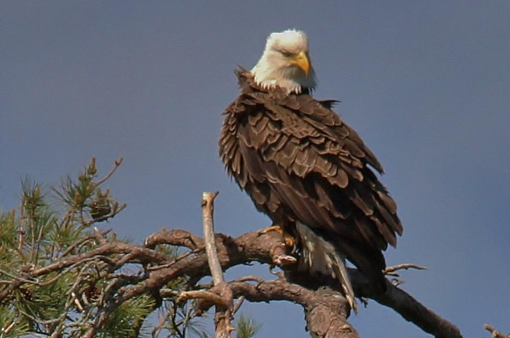 May 27 Eagles 083 (1036x686)