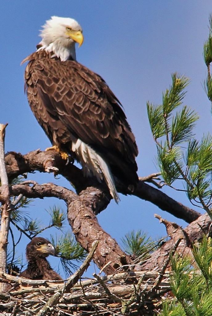 May 27 Eagles 085 (861x1280)