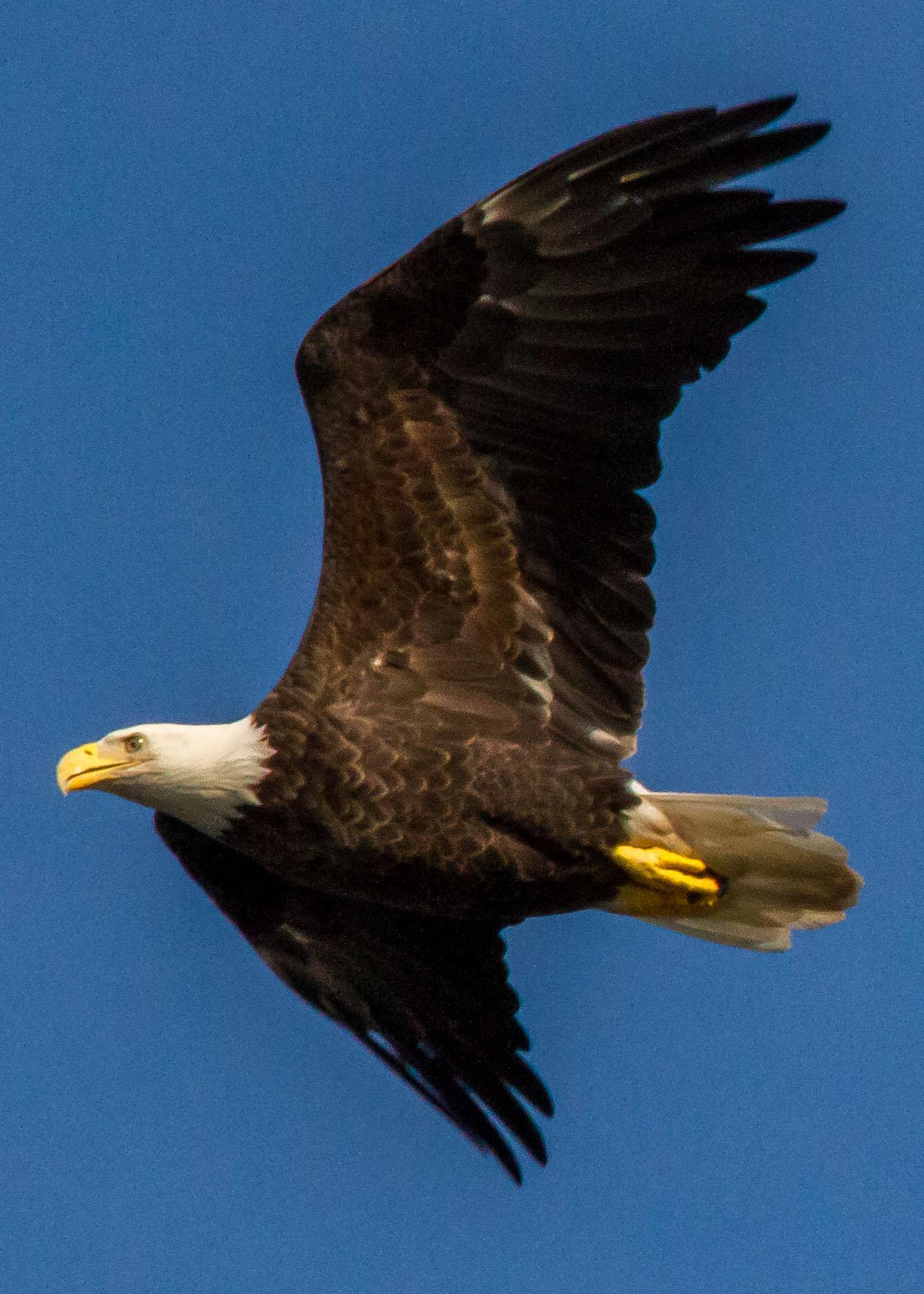 eagles 7-31 042b