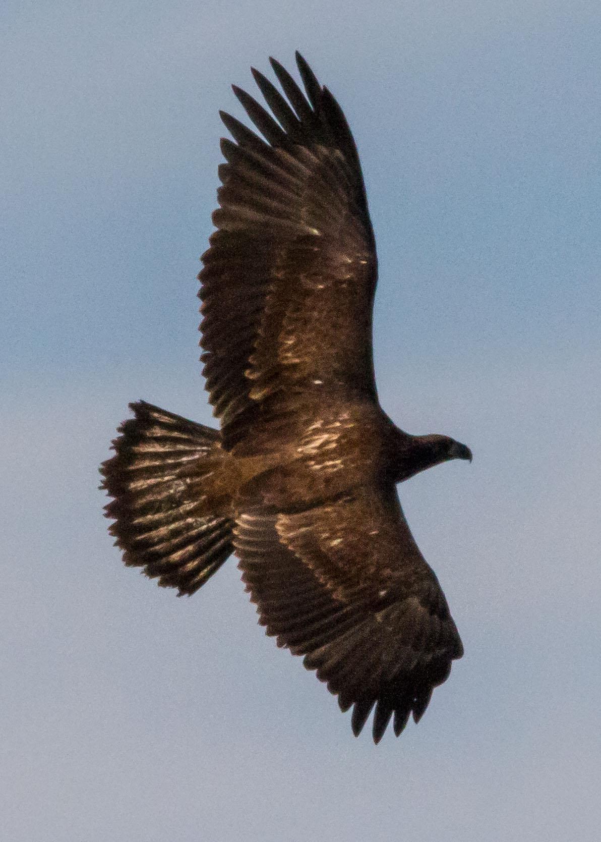eagles 7-31 059