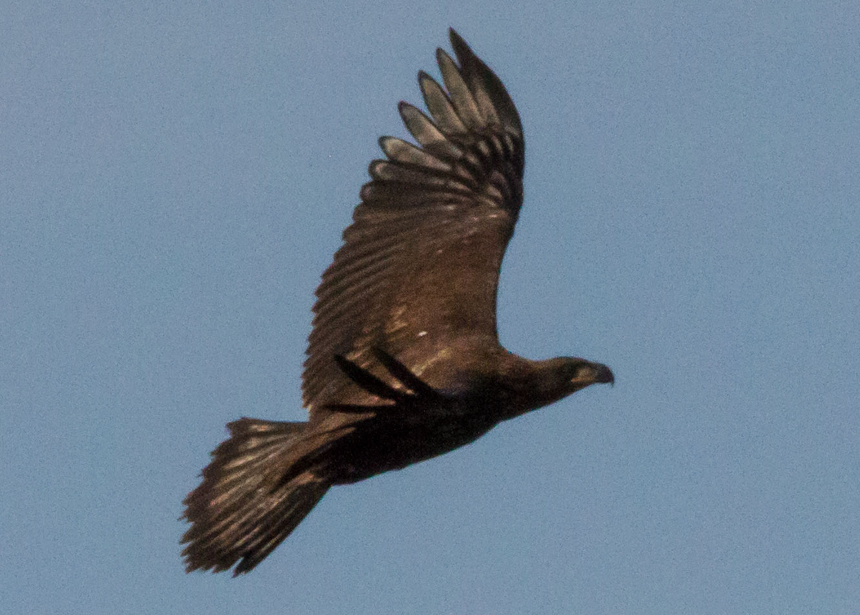 eagles 7-31 063