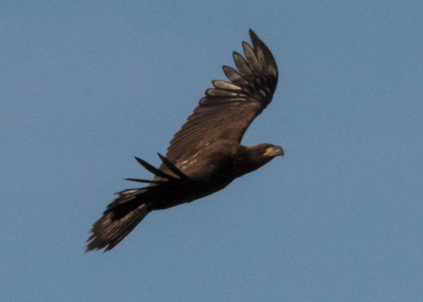 eagles 7-31 064