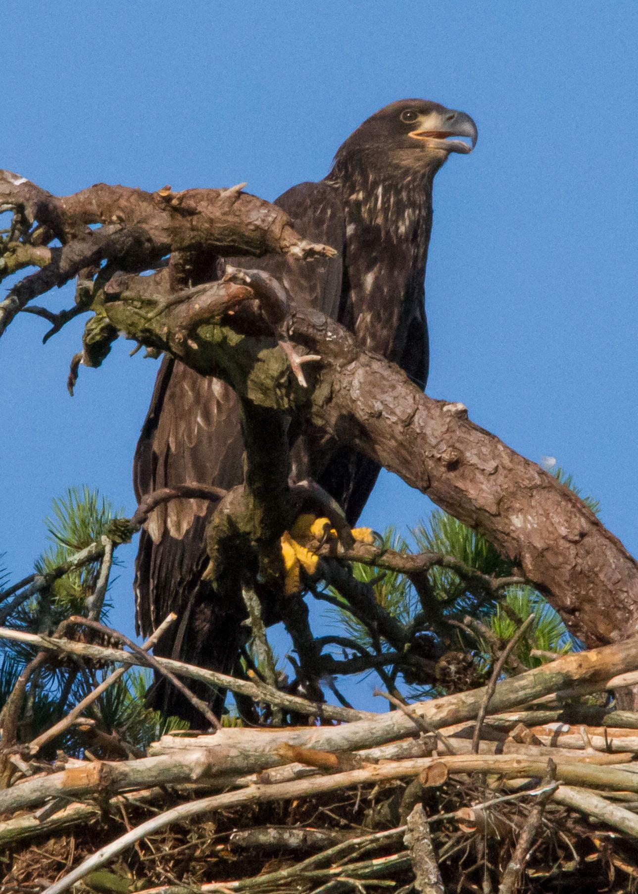 eagles 7-31 075b