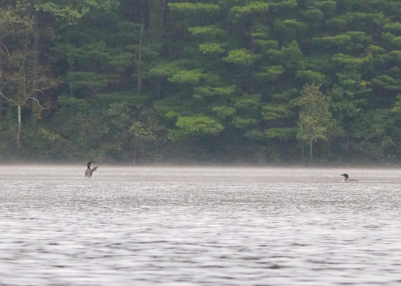 Kayak Foggy Morn 083 (800x571)
