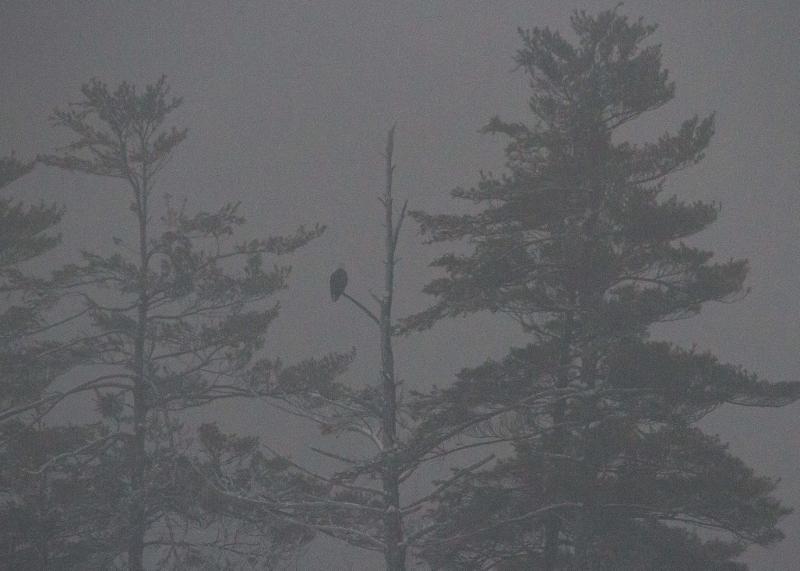 Ice Storm '13  182 (5) (800x571)