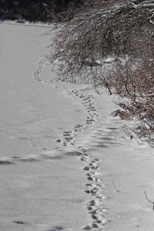 Ice Storm '13 30 157 (533x800) (2)