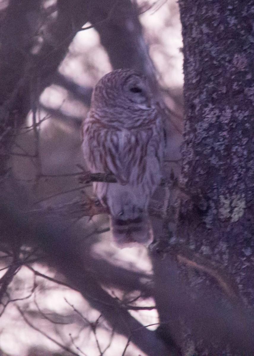 Owl - Mar 7 (10)