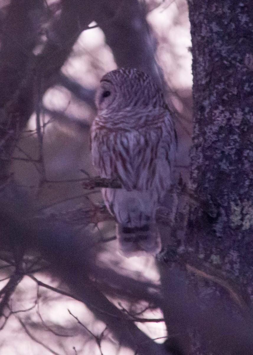 Owl - Mar 7 (11)