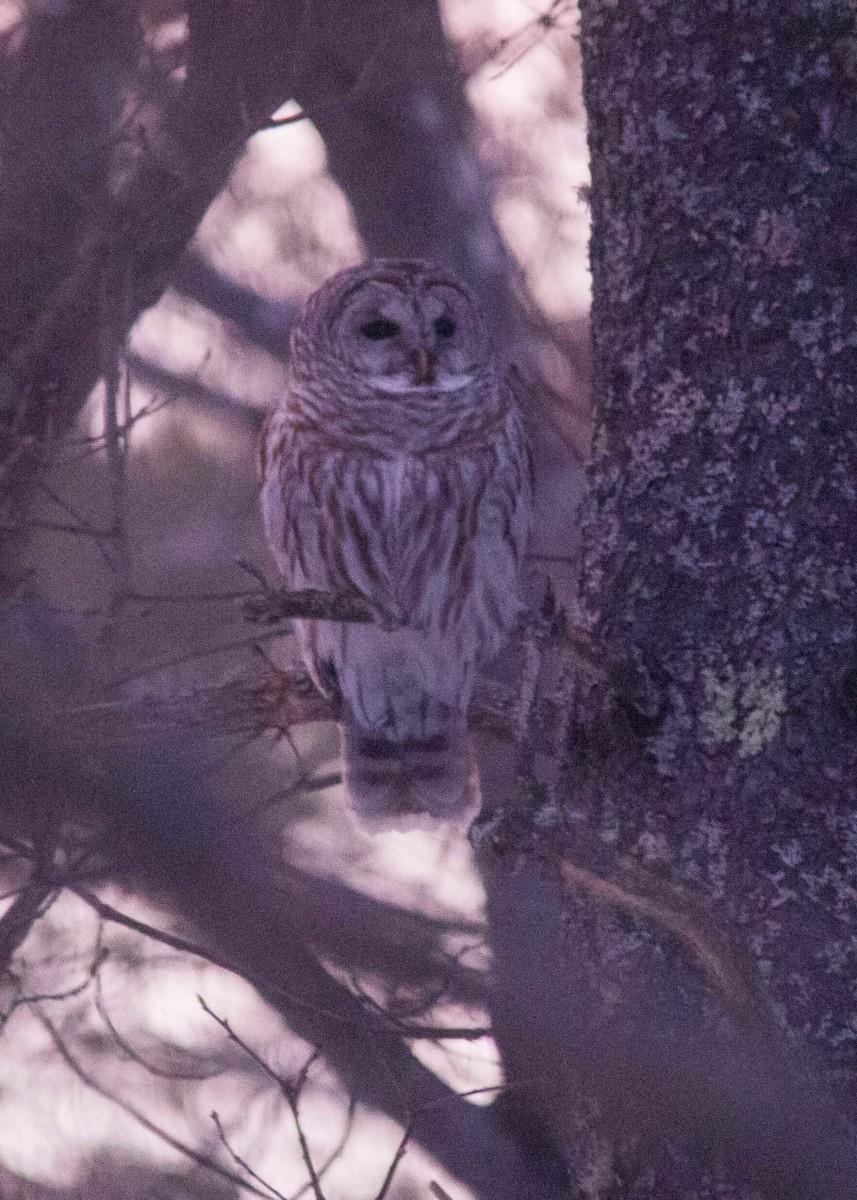 Owl - Mar 7 (3)