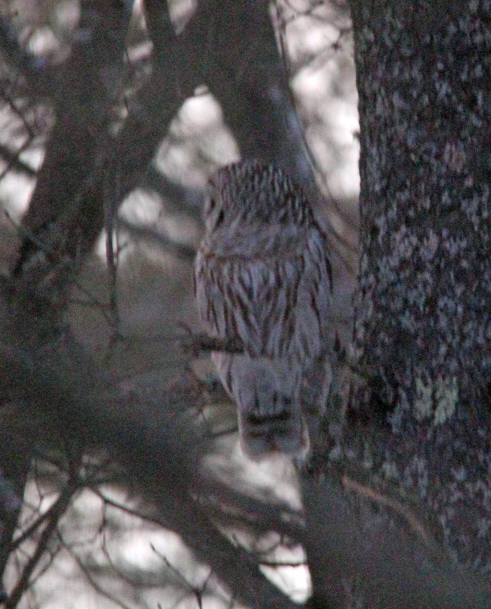 Owl - Mar 7 (7)