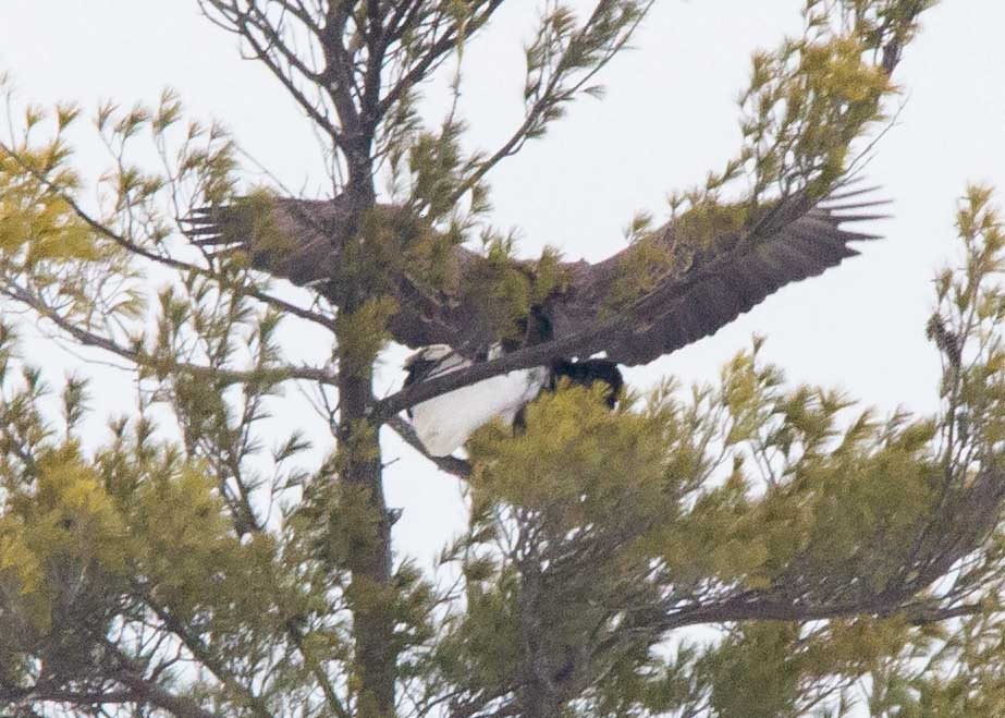 eagles 3-2  (9)