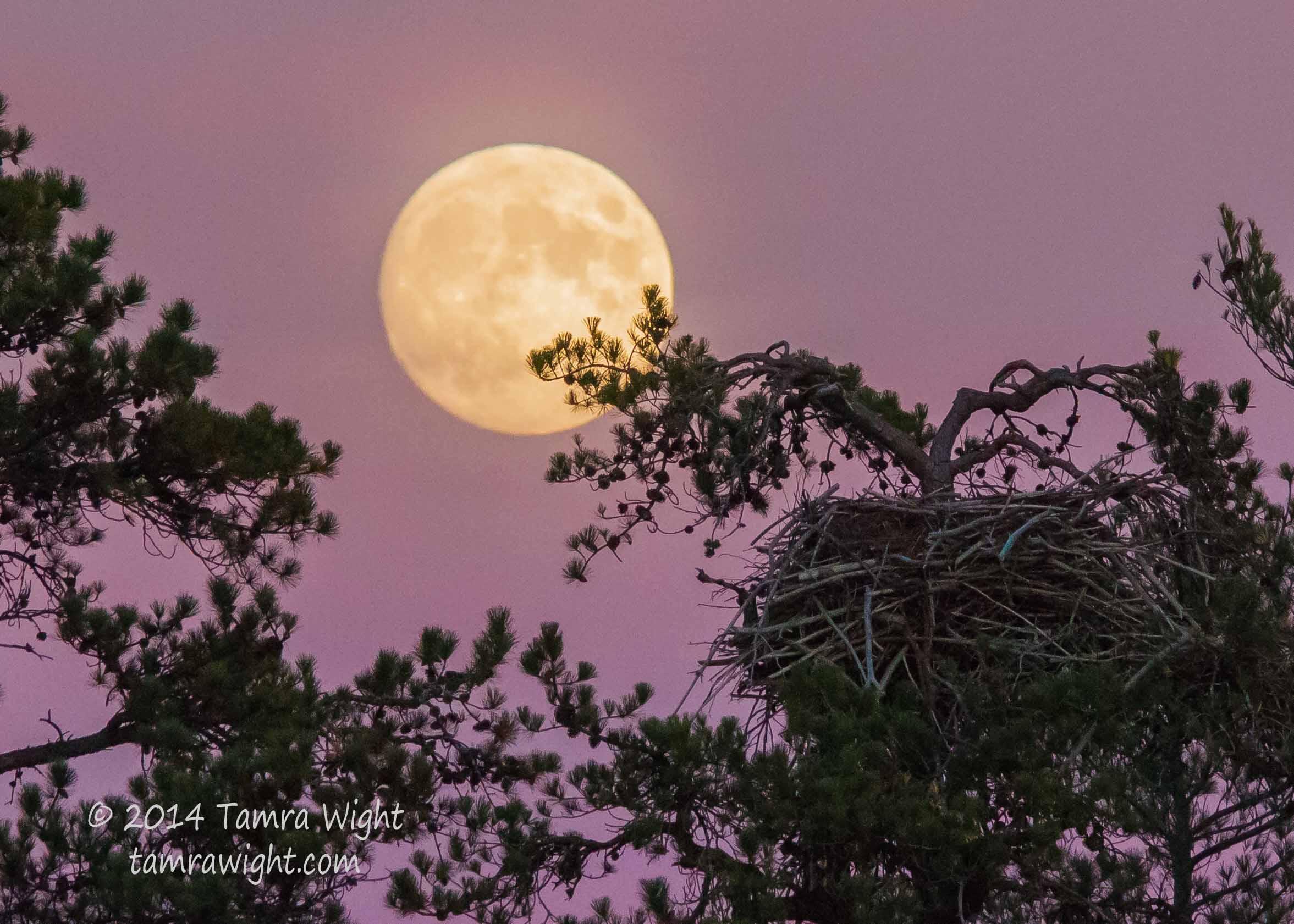 Walk Nov full moon (60)