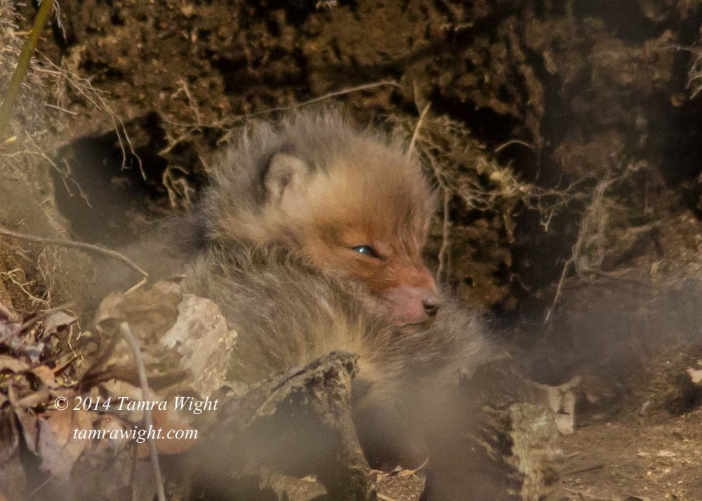 fox kit 5 4-14