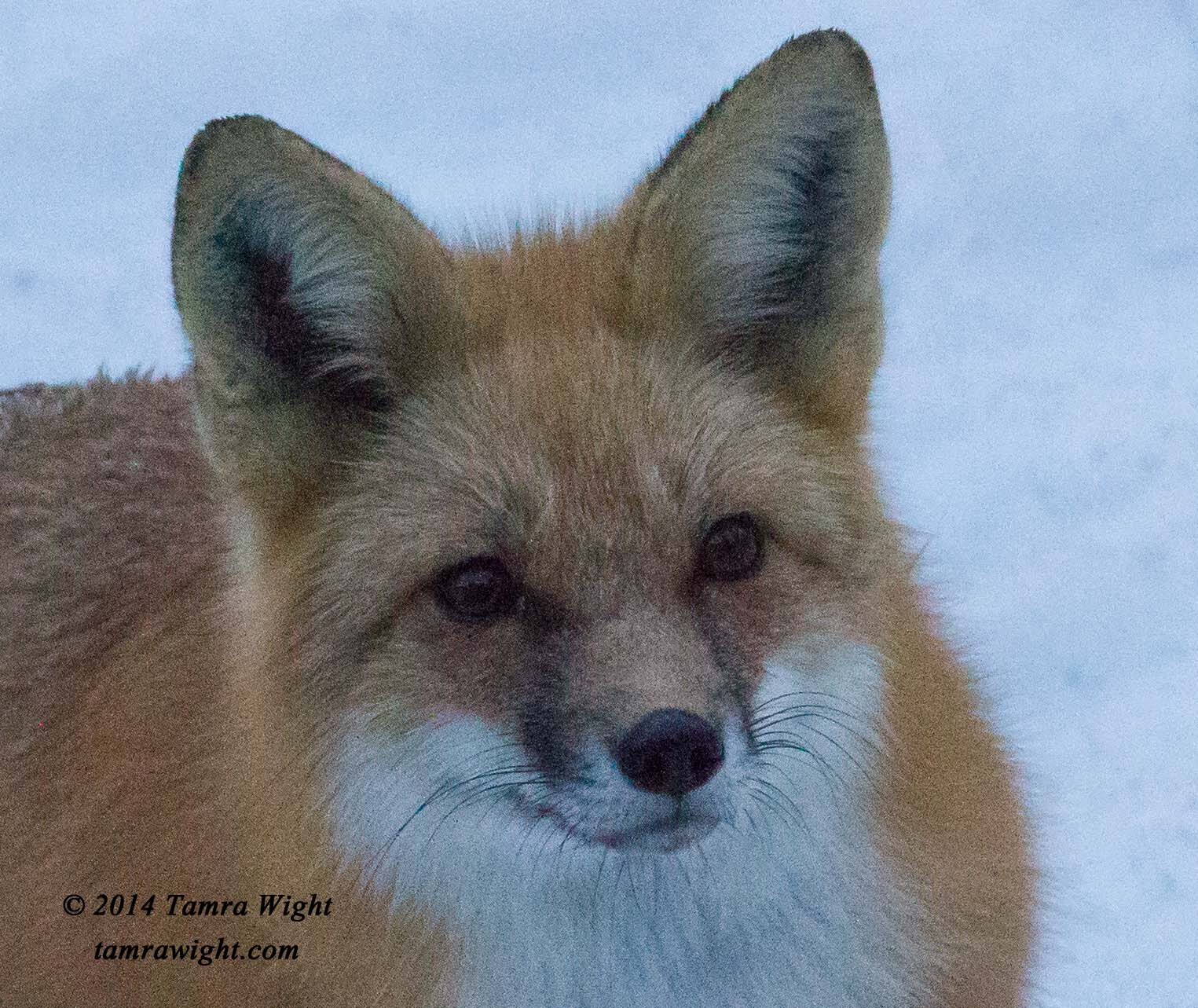 fox outside window 4-1 9