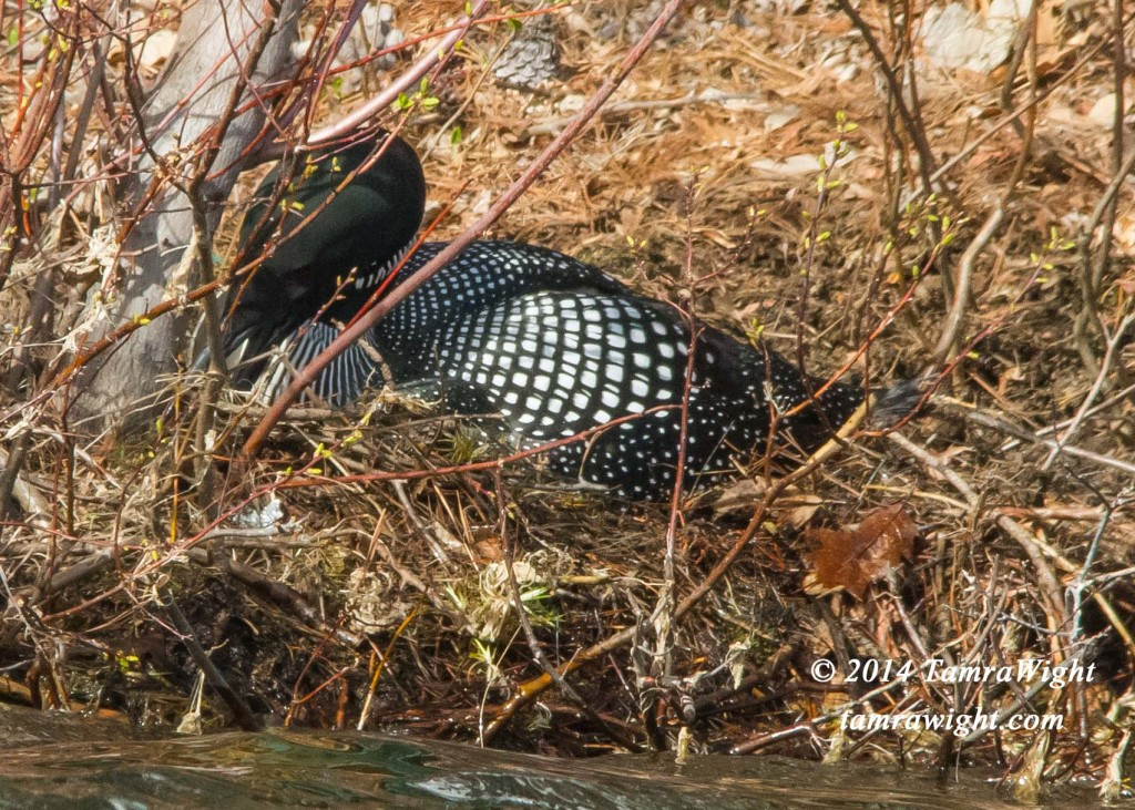 Loon Nest Building 5-13 (22)