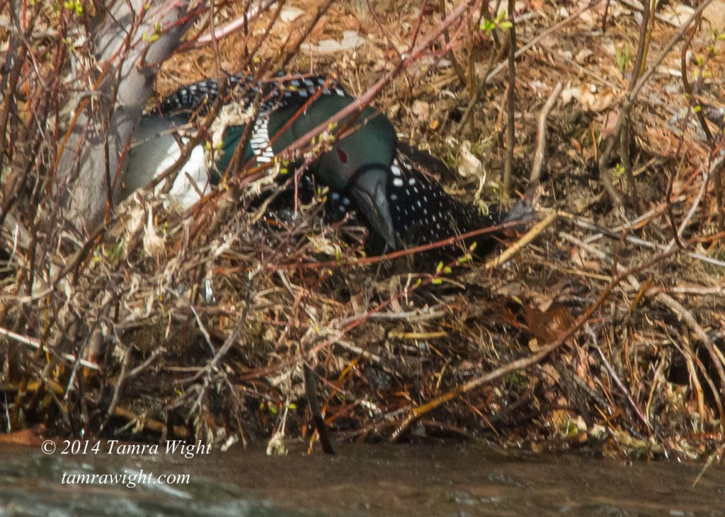 Loon Nest Building 5-13 (24)