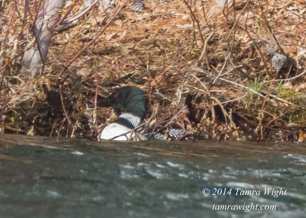 Loon Nest Building 5-13 (28)