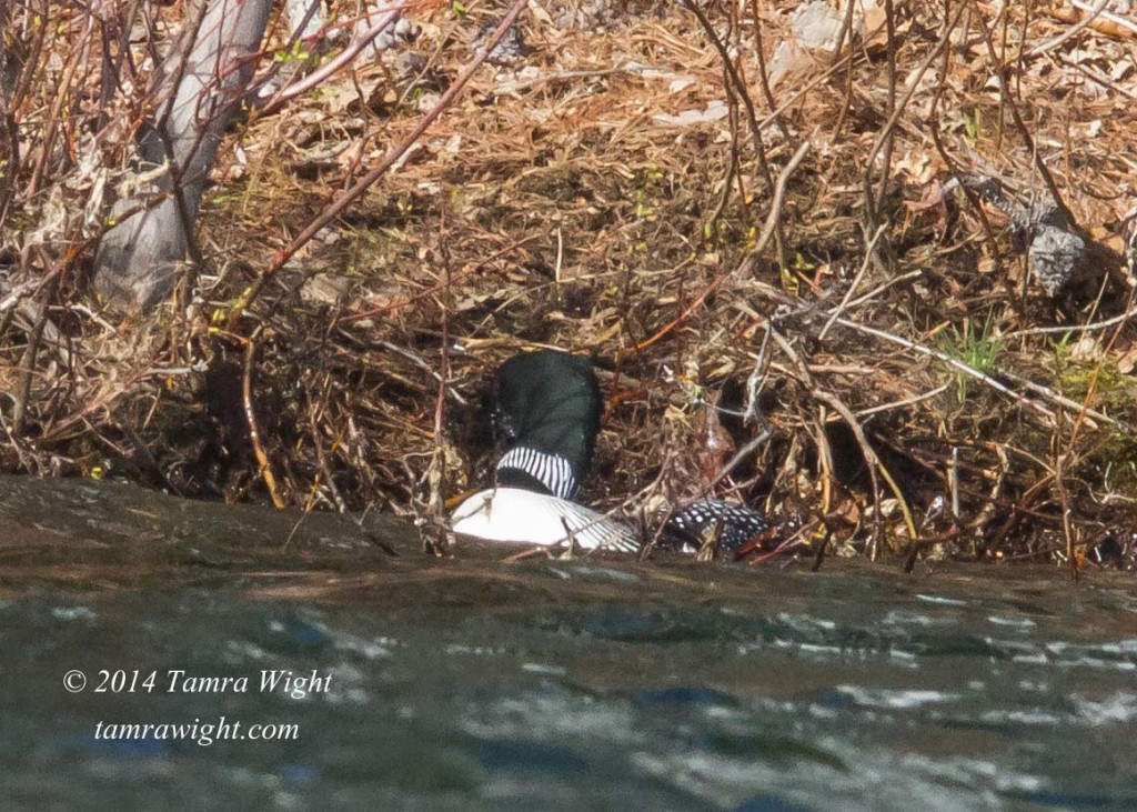 Loon Nest Building 5-13 (29)