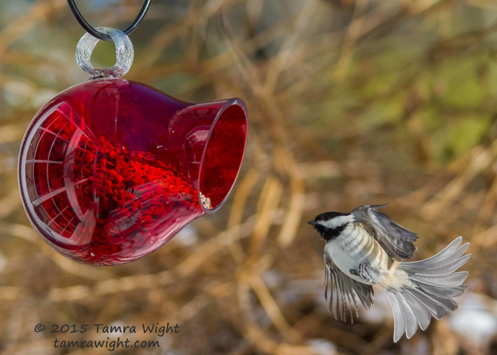 red feeder take2  (24)