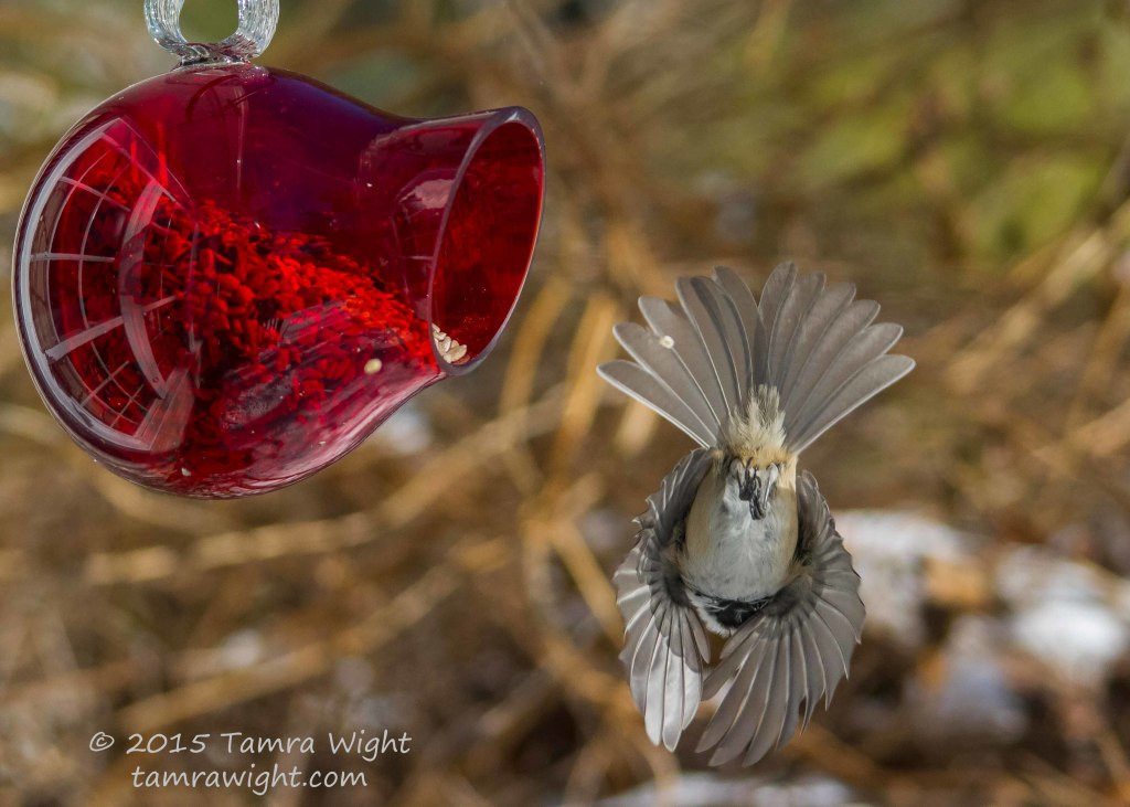 red feeder take2  (30)