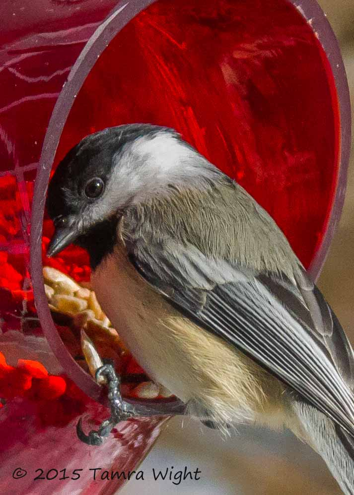 red feeder take2 (41)