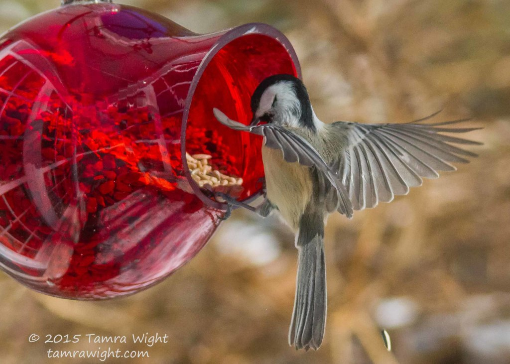 red feeder take2  (56)