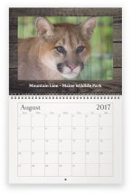 maine-wildlife-aug