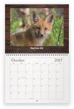 maine-wildlife-oct