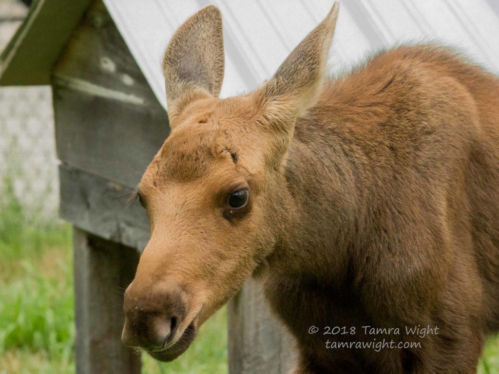 Words and Wildlife Blog | Tamra Wight | Children's Author